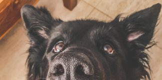 © Pexel hungriger Hund