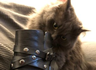 Sarahs Katze