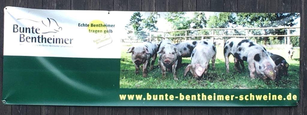 © weidefunk Bunte Bentheimer Schweine