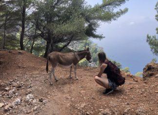 Juliane mit Esel auf den Kanaren