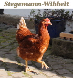 Stegemann-Wibbelt – Großer, familiärer Hofladen im Norden Münsters